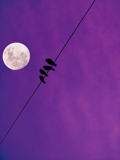 Low angle view of silhouette cables against sky at night