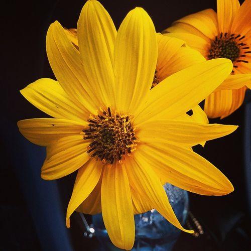 Flowers Fiori Twoyearsoflove Dueannidinoi anniversario loveyou love amore