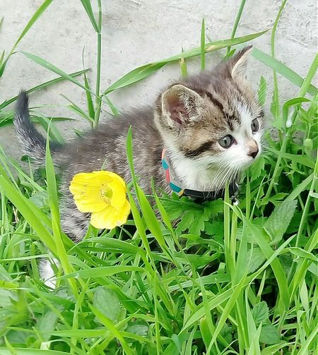 Cat looking away in grassy field