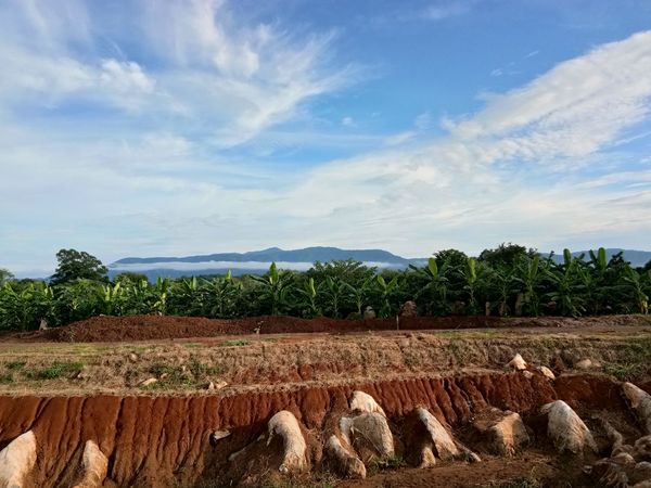 Clear Sky Rock Agriculture Beauty In Nature Cloud - Sky Day Field Mountain Nature No People Outdoors Rural Scene Scenics Sky Stone Tree Lost In The Landscape