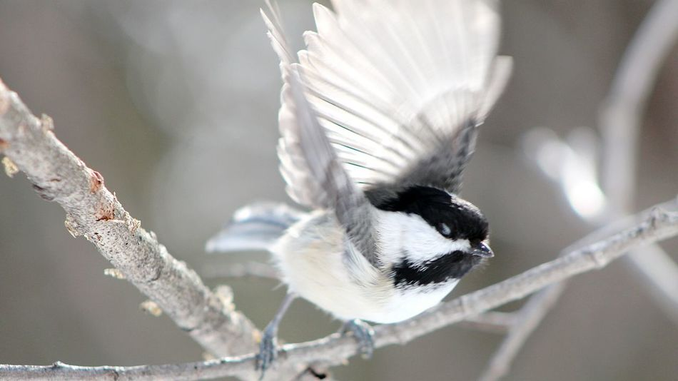 Birds Nature Taking Photos Getting Inspired Flying Forest Spring Trees Oiseaux Wings