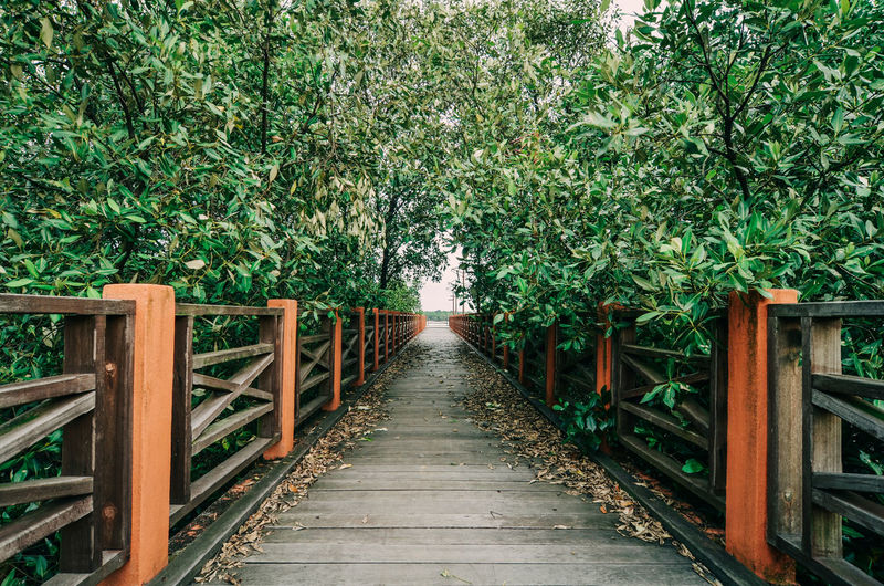 Empty Wooden Footbridge Amidst Bamboo Plants