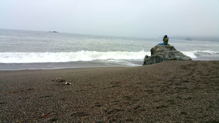 Solitary man sitting on boulder at ocean's edge. Taking photo of baby seagull eating a salmon head. Solitary Man Photographer Baby Pegion Eating Salmon Head Fog Zen Atmospheric Beach Photo Sitting EyeEm Selects Water Sea Wave Beach Sky Shore Surf Ocean Coast Countryside Sandy Beach Sand Seaside Pebble Beach Foggy Tide
