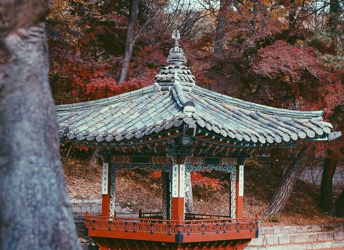 Roof Architecture Built Structure Building Exterior Day Religion Autumn Tree Outdoors No People Place Of Worship Nature