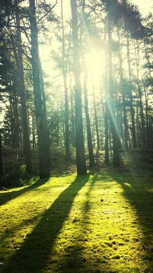 Morning walk Walking Around Spring Has Arrived
