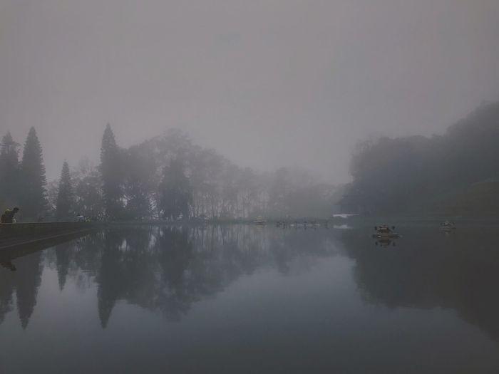 Water Tree Dawn