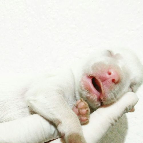 Hush lil' one🐶😴 Puppy PuppyLove Doglover Sleepingpuppy Love Peace Baby Peacefulscene Animallover Animal Pet Beauty Cute Loveforpets