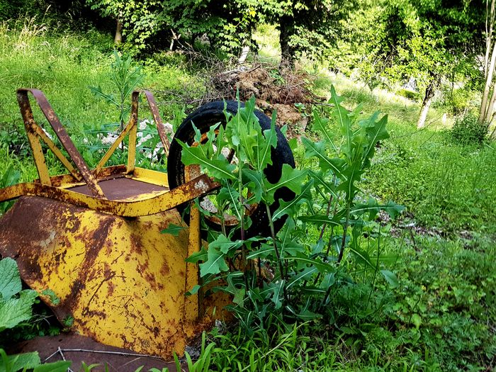 Old wheelbarrow lost in the grass... Yellow Color Old Wheelbarrow Yellow Wheelbarrow Old Things Never Die Green Grass 🌱 High Angle View Grass Close-up Green Color