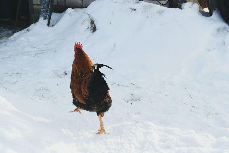 Bird on snow field