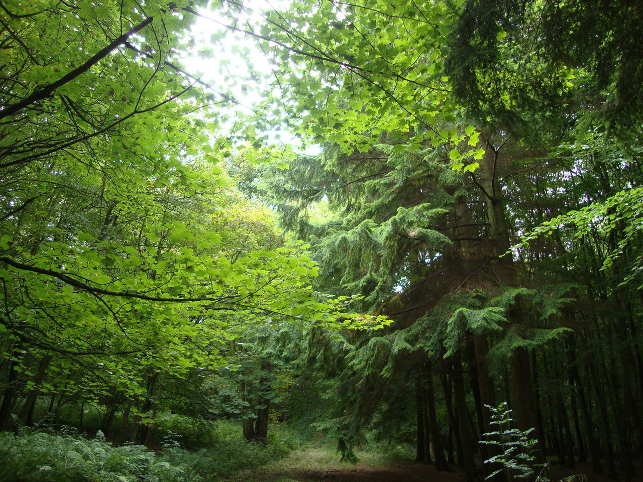 tree, nature, forest, growth, tranquility, beauty in nature, tranquil scene, green color, scenics, day, outdoors, no people, branch