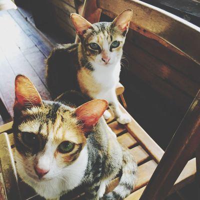Cat Amimals Hi! Hatyai Banpru Taking Photos Idvj24hr