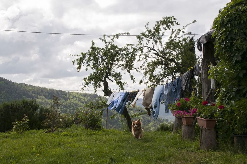 Beauty In Nature Clothesline Cloud Cloud - Sky Cloudy Day Dog Field Grass Grassy Green Color Growth Hill Landscape Mountain Nature Outdoors Plant Rural Scene Sky Tranquil Scene Tranquility Tree Tuscany Village