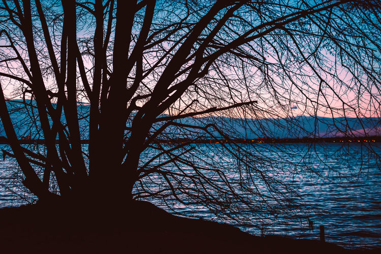 Tree Water Branch Bare Tree Plant Tranquility Beauty In Nature Sky Nature Tranquil Scene Scenics - Nature Outdoors No People Silhouette Lake Sunset Non-urban Scene Trunk Tree Trunk Bluehour Shore Edge