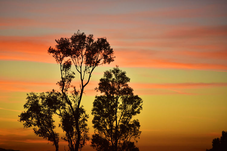 Orange Clouds Beauty In Nature Dramatic Sky Growth Landscape Nature No People Orange Color Outdoors Scenics Silhouette Sky Sun Sunset Tranquil Scene Tranquility Tree
