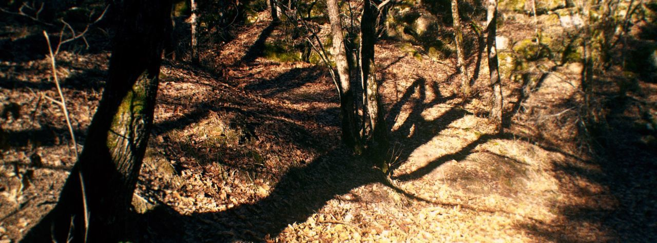Day Forest No People Outdoors Shadow Tree Tree Trunk WoodLand