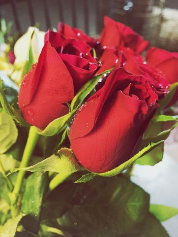 Red Roses ❤️ SignOfLove 🙈 Remembering You 😘😘😘😘