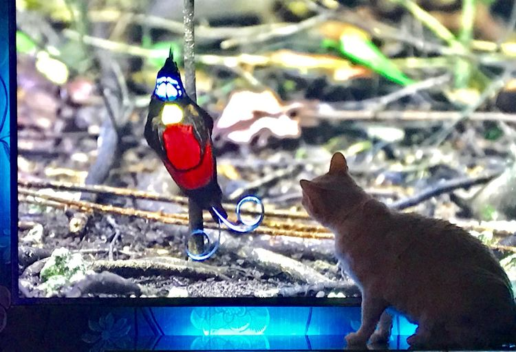Cat Bird Tv