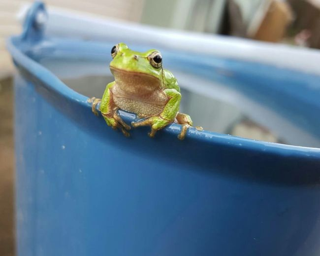 ある日出会った🐸 No People AnimalAnimal Themes One Animal Nature A Frog  Amphibian