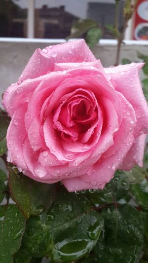 https://youtu.be/dNTGtAFzZ5U Somayıunutmaunutturma EyeEm Nature Lover Eye4photography  Flowerporn Ineedamiracleformylostsoul Natural Beauty Raindrops Spring Into Spring Broken Dreams Nature_collection