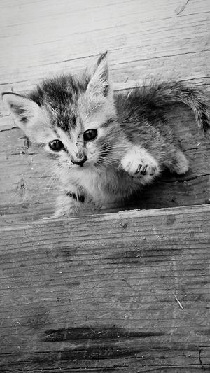 Animal Themes One Animal Mammal No People Domestic Animals Indoors  Pets Day Close-up Kittens Kitten Kitten Love Kitten Adorable Kittenlovers Kittens Of Eyeem Goodday Naturelovers EyeEmNewHere Fragility