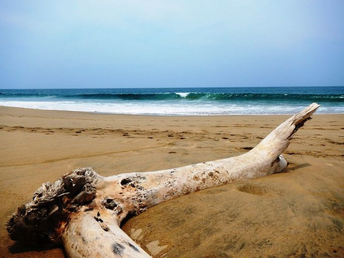 EyeEm Selects Beach Sand Sea Water Nature Sky Beauty In Nature Outdoors Scenics Tranquility Travel Destinations No People Vacations Wave Day Tree Trunk