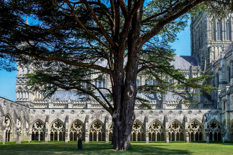 Cathederal Salisbury Salisbury Cathedral  Arch Architecture Building Building Exterior Built Structure Cathederal Cloisters Cloisters  Courtyard  Day Grass History Lawn Nature Place Of Worship Plant Religion Sky The Past Tourism Travel Destinations Tree Trunk