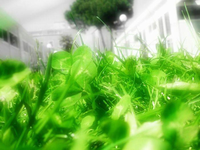 Grass Green Xperia S