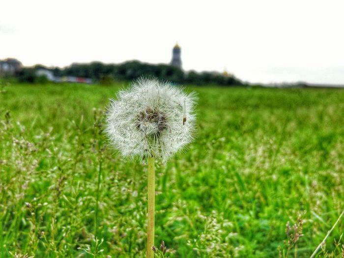 Green Kyiv Ukraine Archive Grass