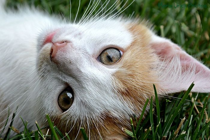 An old cat of mine. Animal Animal Themes Cat Cat Ears Cat Nose Cats Close Up Close-up Cute Domestic Animals Ears Eyes Fur Grass Green Color Kitten Macro Mammal No People One Animal Pet Pink Tan Whiskers White
