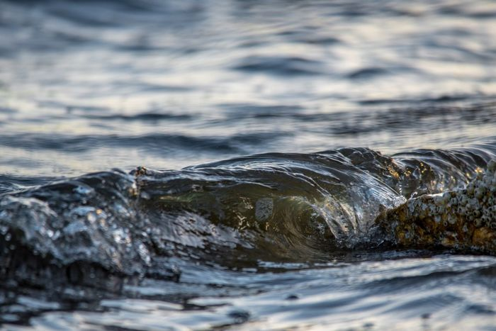 Mini Slabs Surfing Water Waves Surf Abstract No People Nature Water Waterfront Day One Animal Outdoors Beauty In Nature Sea Close-up