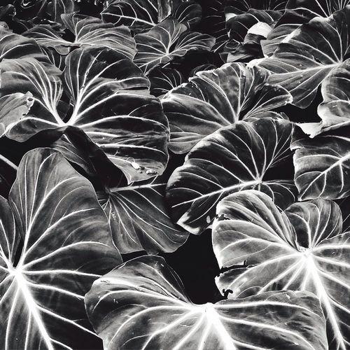 plants First Eyeem Photo