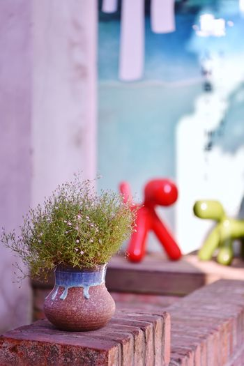 No People Focus On Foreground Close-up Table Plant Indoors  Nature Still Life Day Architecture Wall - Building Feature Wood - Material Potted Plant Decoration Art And Craft Small Window Representation Red Toy