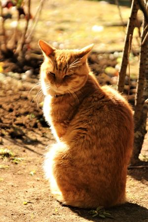 Japan Animal Themes Cat Domestic Cat One Animal Outdoors