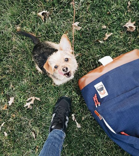 New Balance New Balance 996 Dog Doglife Cute Dorkie Doglover Small Dog EyeEm Selects Backpack YKRA Nature Low Section High Angle View Childhood Footwear Shoe Jeans Denim