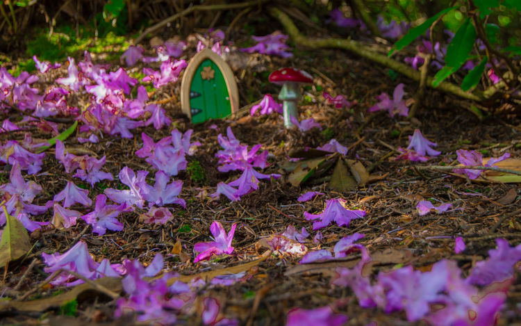18-55mm Blooming Botany Clare Glens Close-up Fairy Fairy Door Fairytale  Flower Home In Bloom Ireland Nature Nikon D3200 Petal Pink Color Purple Enchanted  Colour Of Life