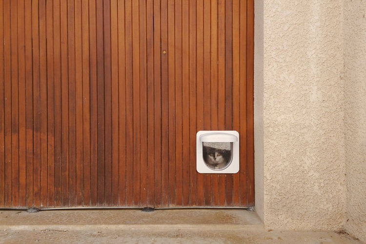 Should I stay or should I go. Meow, meow. Animal Cat Door Pet Door Wall Wall - Building Feature Home Is Where The Art Is Always Be Cozy Place Of Heart Pet Portraits The Graphic City