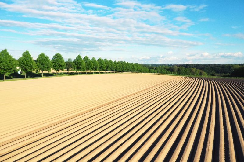 Ploughed Field Geometric Shape Fields And Sky Blue Sky Spring Is In The Air Acre Field Ploughed Field Plough Sky Plant Cloud - Sky Tree Agriculture Day Nature Tranquil Scene No People Field Rural Scene Farm