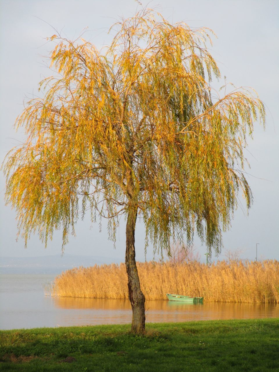 Tree Growing At Lakeshore Against Sky
