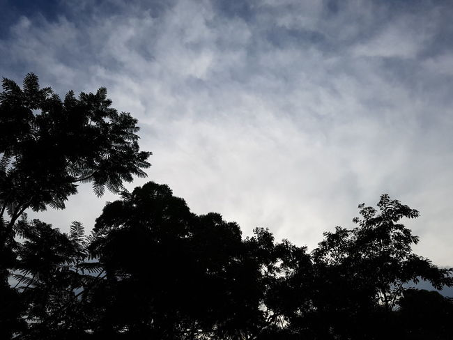 Tree Silhouette Low Angle View Sky Nature No People Outdoors