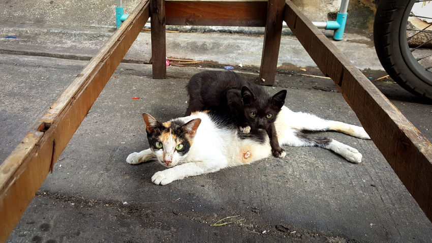 Mommy&Me Stray Cat Mommyandme Poor  Street Life Black RISK Accident Alive  Suction Milk Shelter Help Home Hug Hope Pets Domestic Animals Animal Themes Mammal Domestic Cat Street No People Lying Down Outdoors Relaxation Day Looking At Camera Portrait High Angle View