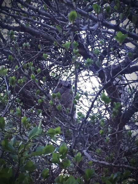 The Little Hidden Figure Nature Owl Low Angle View Tree Beauty In Nature No People Leaf Spotted