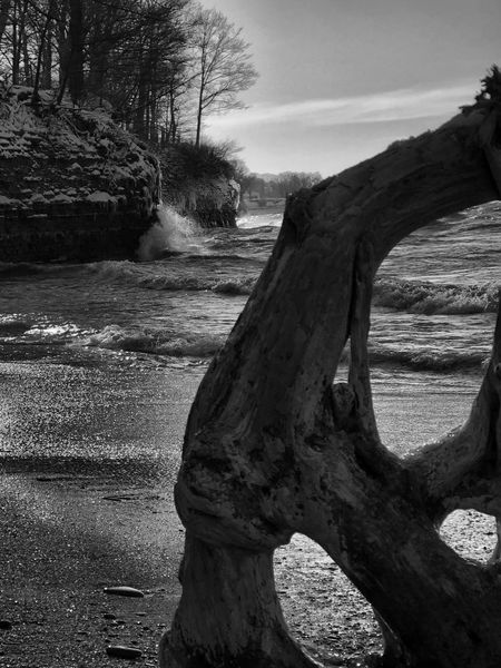 Blackandwhite Photography Lake Erie Great Lakes Blackandwhite Greatlakes LakeErie Beach Driftwood Tree Tree Trunk Nature Day No People Outdoors Landscape Dead Tree Sky Beauty In Nature