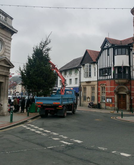 Christmas tree installation christmas tree Installing Decorating Preparing TOWNSCAPE British Town High Street Wales UK Wintertime Fir Tree Town Street Activity Sky Architecture Building Exterior Cloud - Sky Built Structure Vehicle