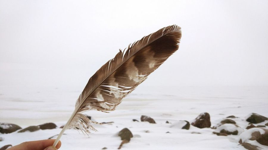 Close-up of feather flying over sea against sky
