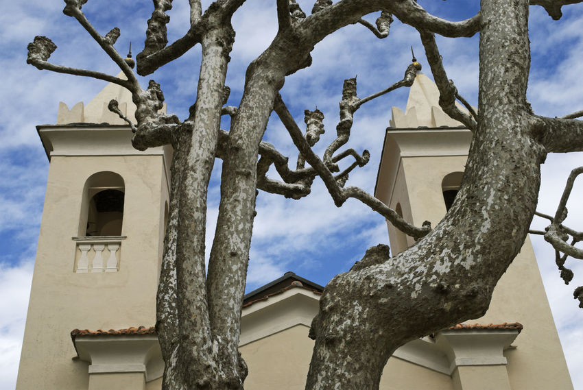 a pruned plane tree in front of a church Branches Church Growing Growth Tree Architecture Branch Building Exterior Built Structure Close-up Contrast Contrasts Nature No People Outdoors Place Of Worship Plane Tree Pruned Religion Spirituality Tree Trunk