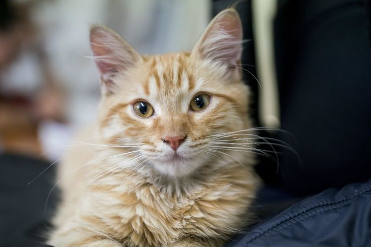 A domestic cat