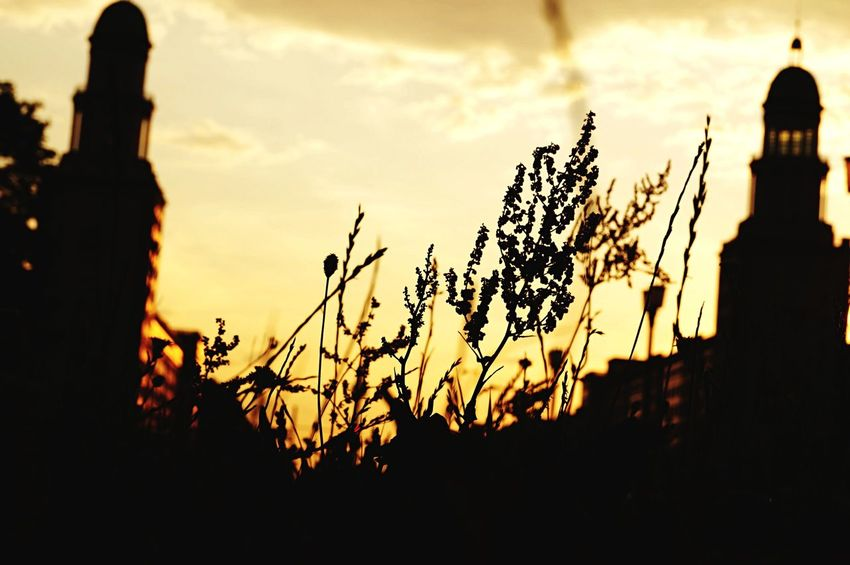 Depth Of Field The EyeEm Facebook Cover Challenge The Great Outdoors - 2015 EyeEm Awards Berlin Photography EyeEm Best Shots Street Photography Streetphotography Sunset_collection Sunset Silhouettes EyeZoom