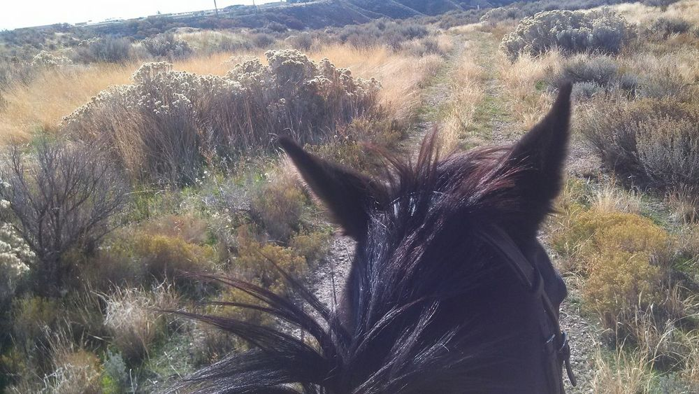 Trail ridin'. Horse Horses Horse Photography  Liz The Mare