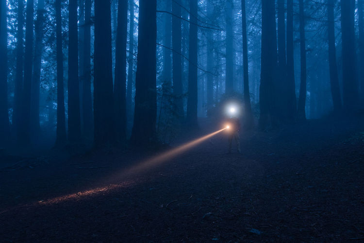 View of trees in the forest at night