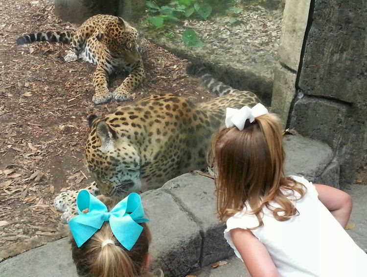 Girls looking at Audubon Zoo's jaguars in New Orleans, LA. Audubon Zoo Zoo Animals  Animals And Children Jaguars JAGUAR Cat Life Big Cats Through The Glass Exotic Animals Exotic Exotic Cat The Tourist The Tourist Mission Bows Fascination